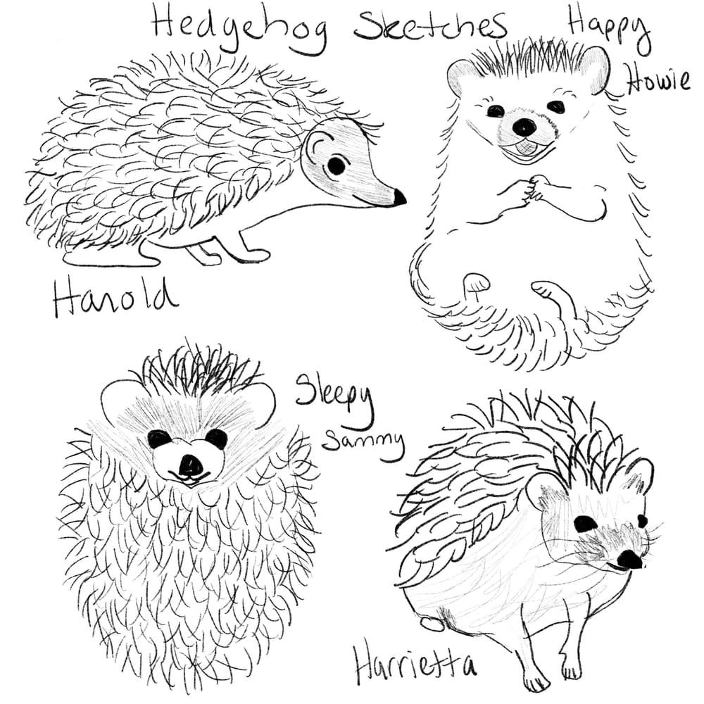 Rachel's Hedgehogs - image 2 - student project