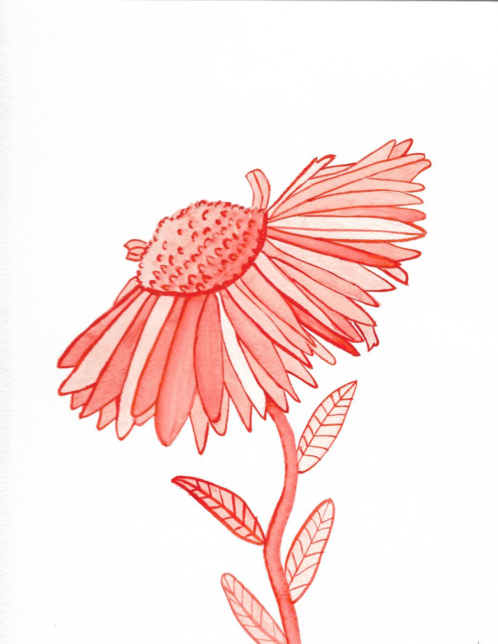 Sunflower and Jellies - image 3 - student project