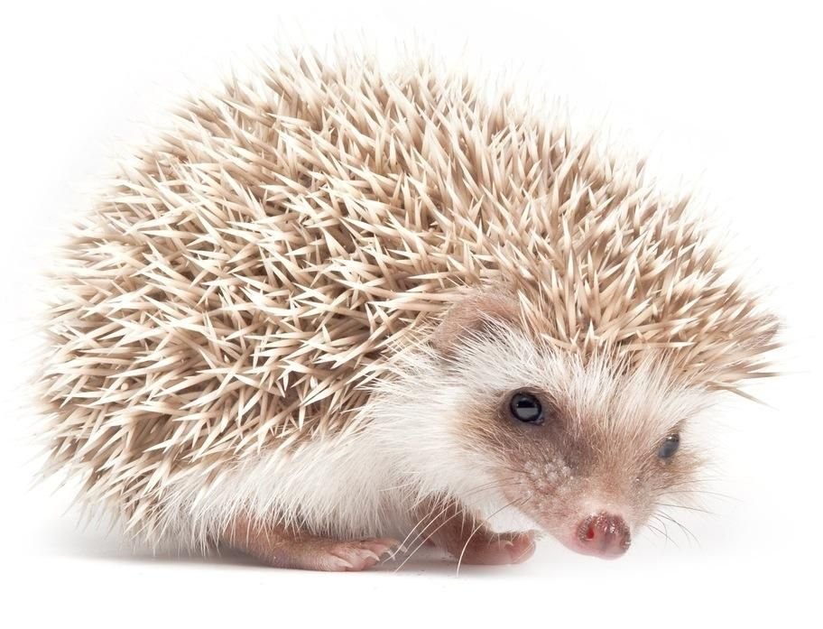 Cute Animals That Are Actually Pointy - image 1 - student project