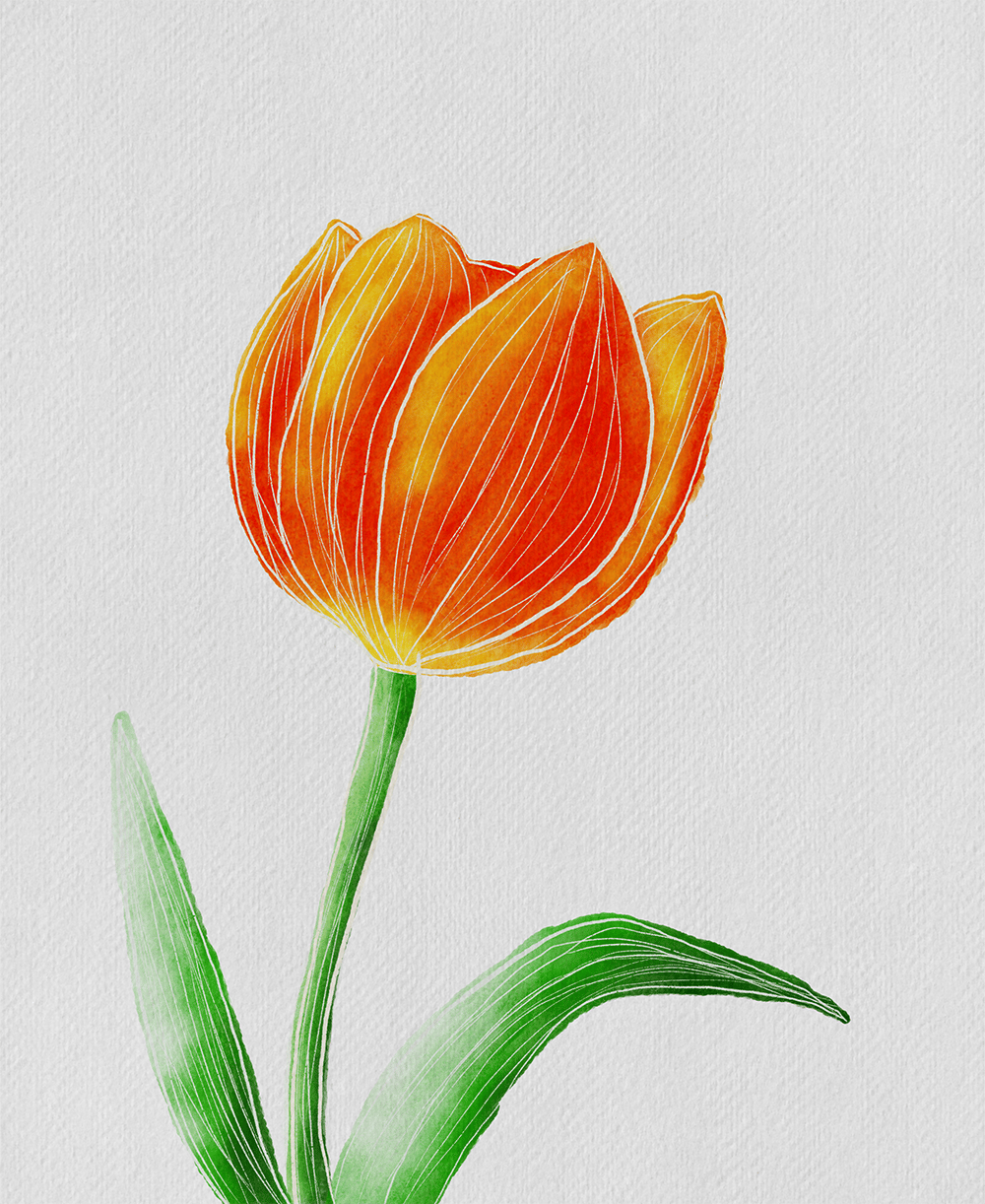Watercolor tulip - image 1 - student project