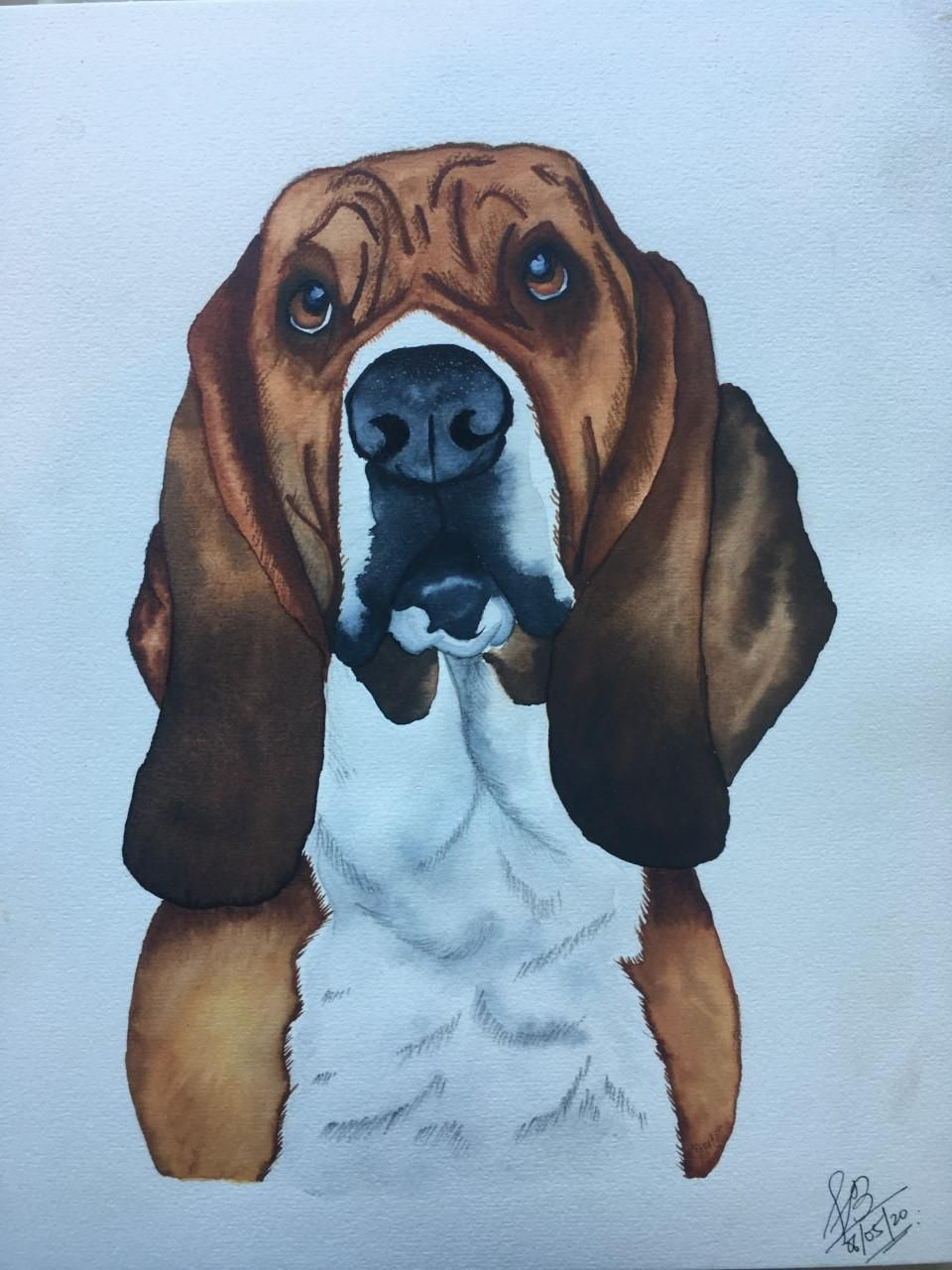 Cooper - Basset Hound - image 1 - student project