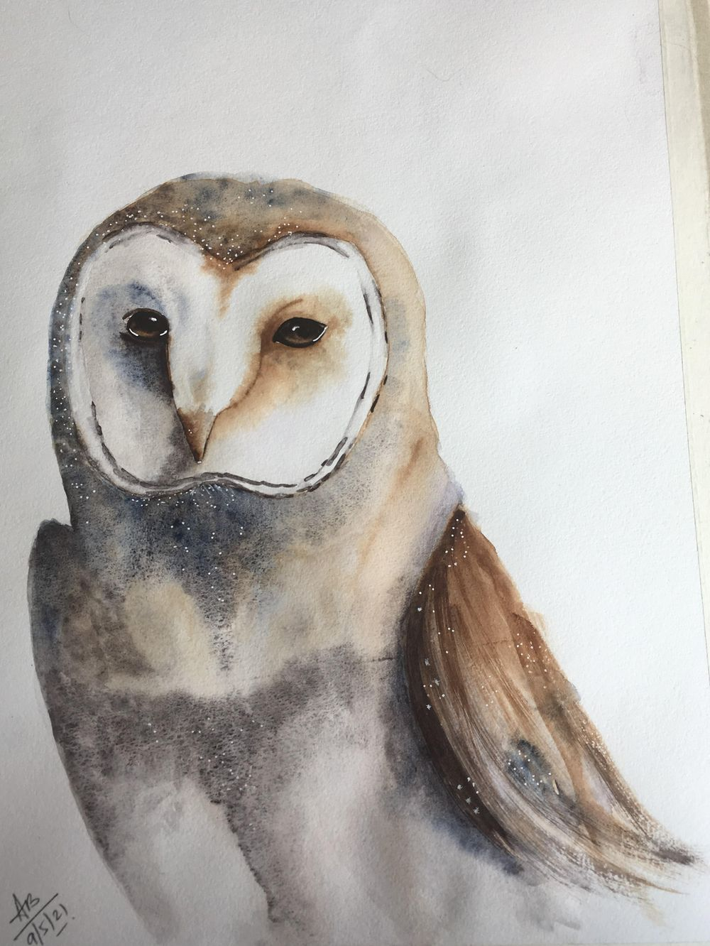 Barn Owl - image 1 - student project