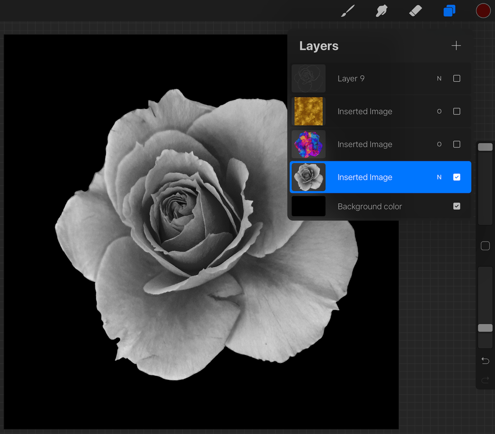 Colourful rose - image 1 - student project