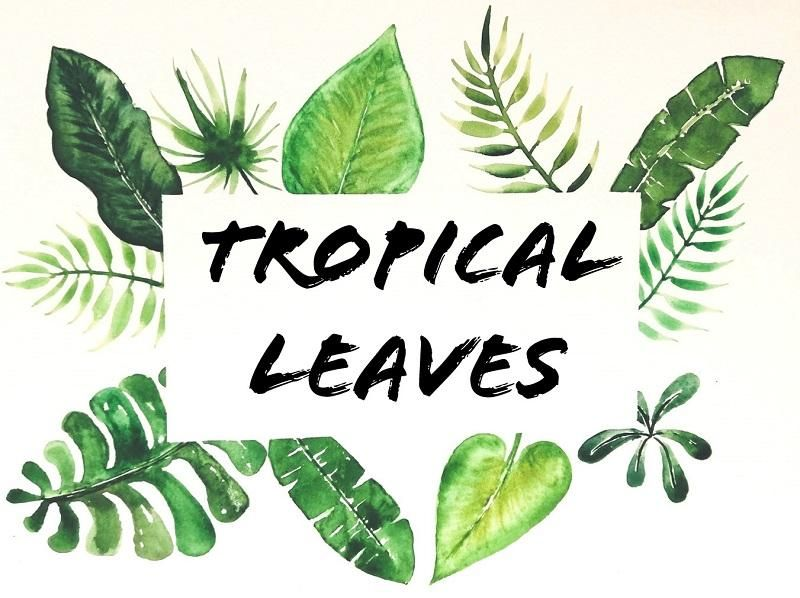my tropical leaves project - image 2 - student project
