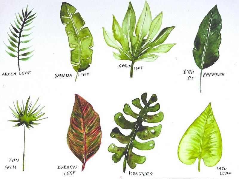 my tropical leaves project - image 1 - student project