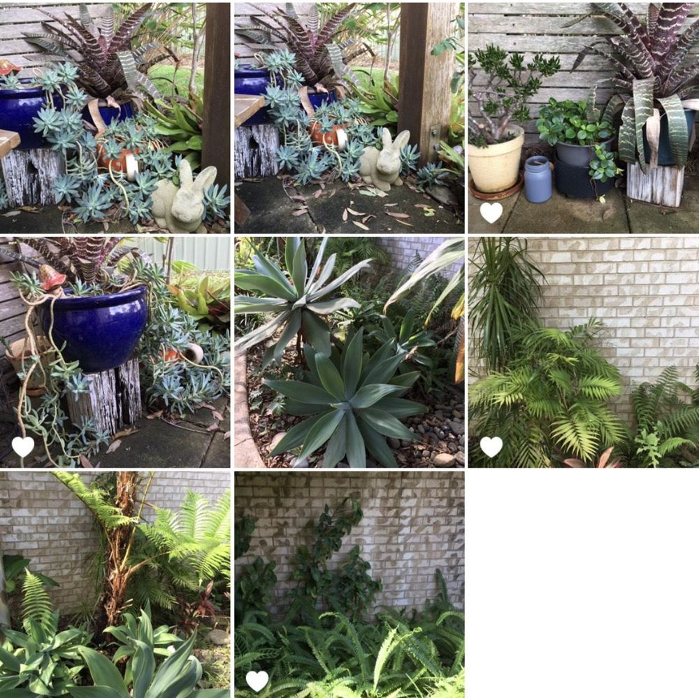 My Little Garden - image 5 - student project