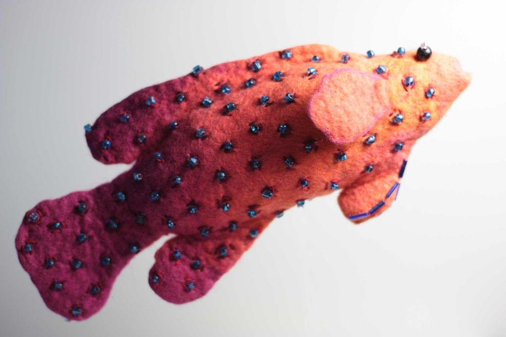 Coral Cod - image 1 - student project