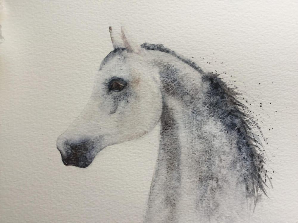 Arabian Horse - image 1 - student project