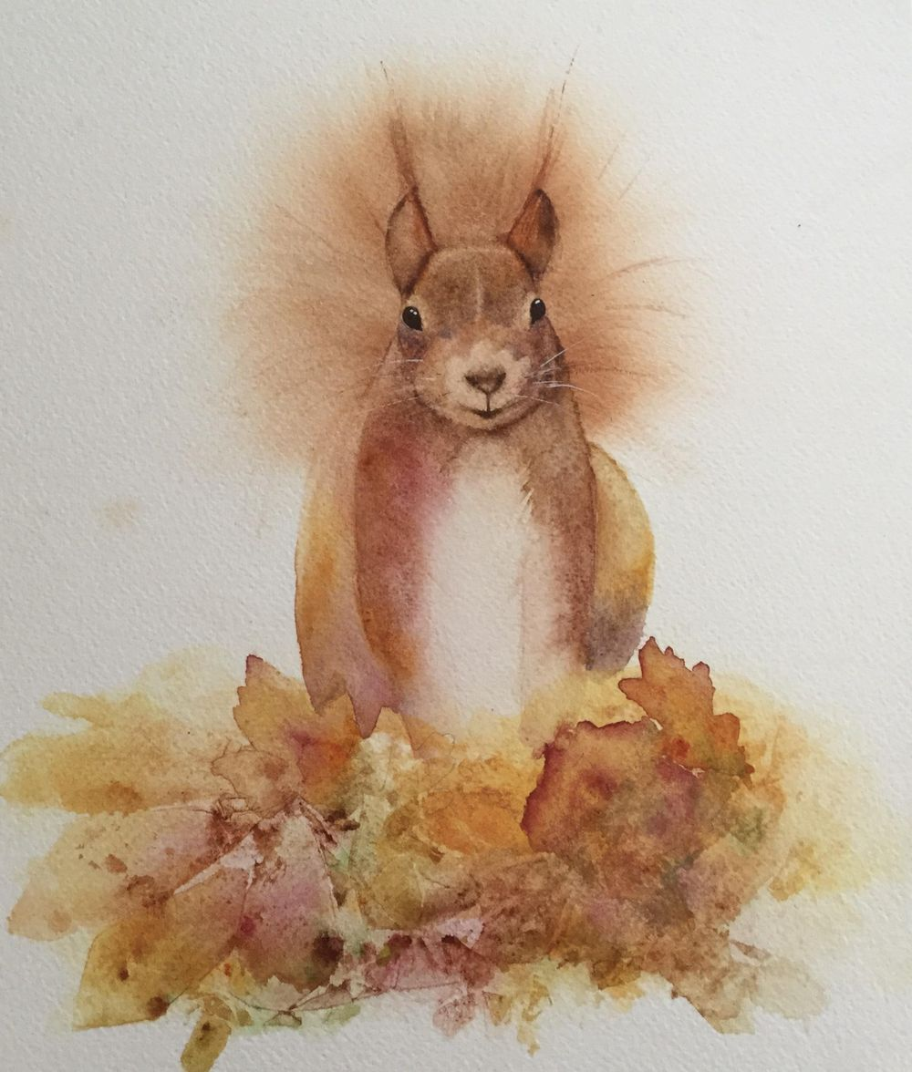 Red Squirrel - image 1 - student project