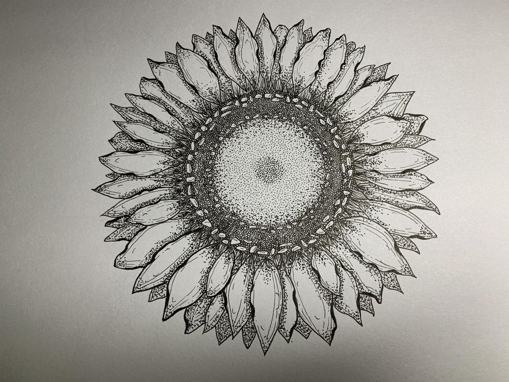 My first sunflower - image 1 - student project