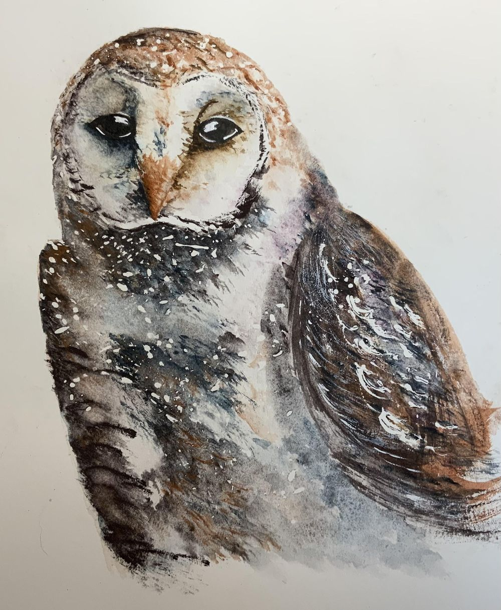 Barn owl second attempt - image 1 - student project