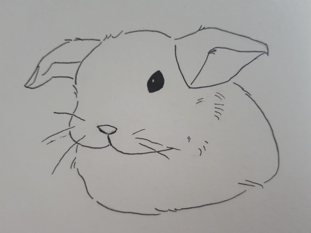 Fluffy bunny and beach landscape - image 1 - student project