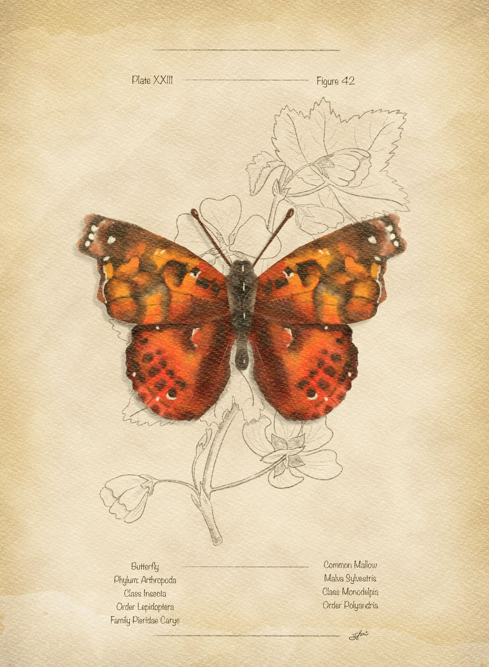 Butterfly Beauty - image 1 - student project