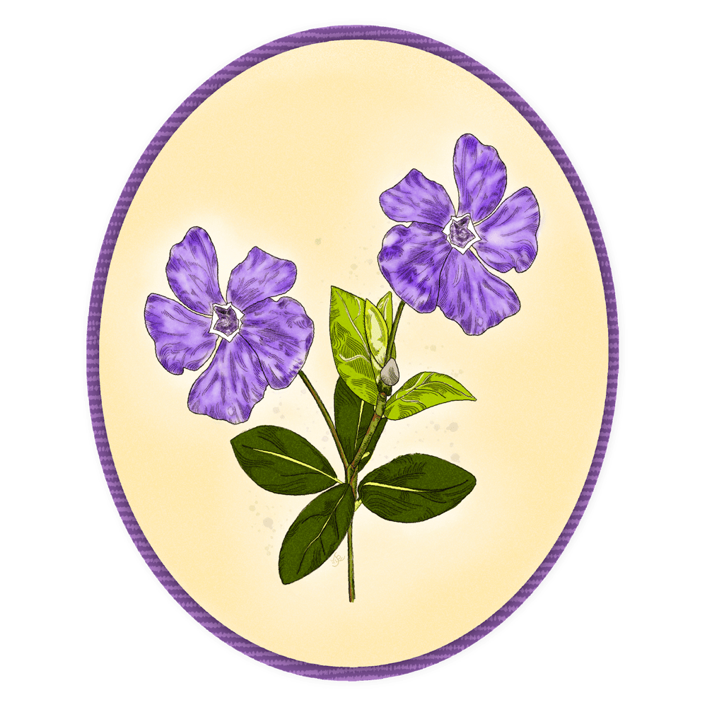 Periwinkle Purple - image 2 - student project