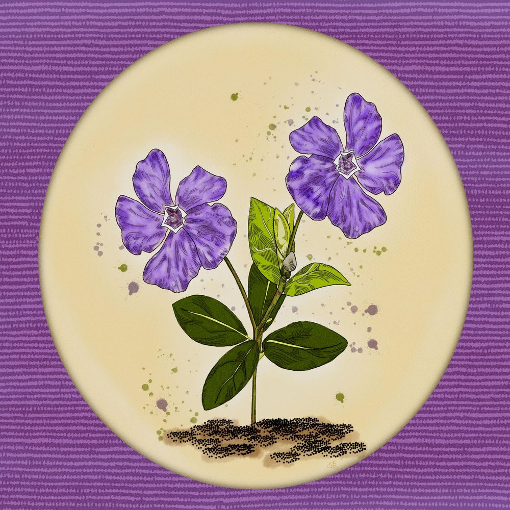 Periwinkle Purple - image 1 - student project