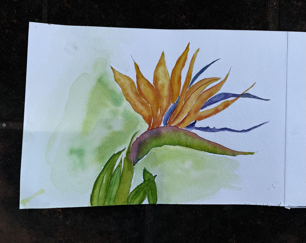 Bird of Paradise - image 1 - student project