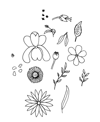 Wild Flowers - image 4 - student project