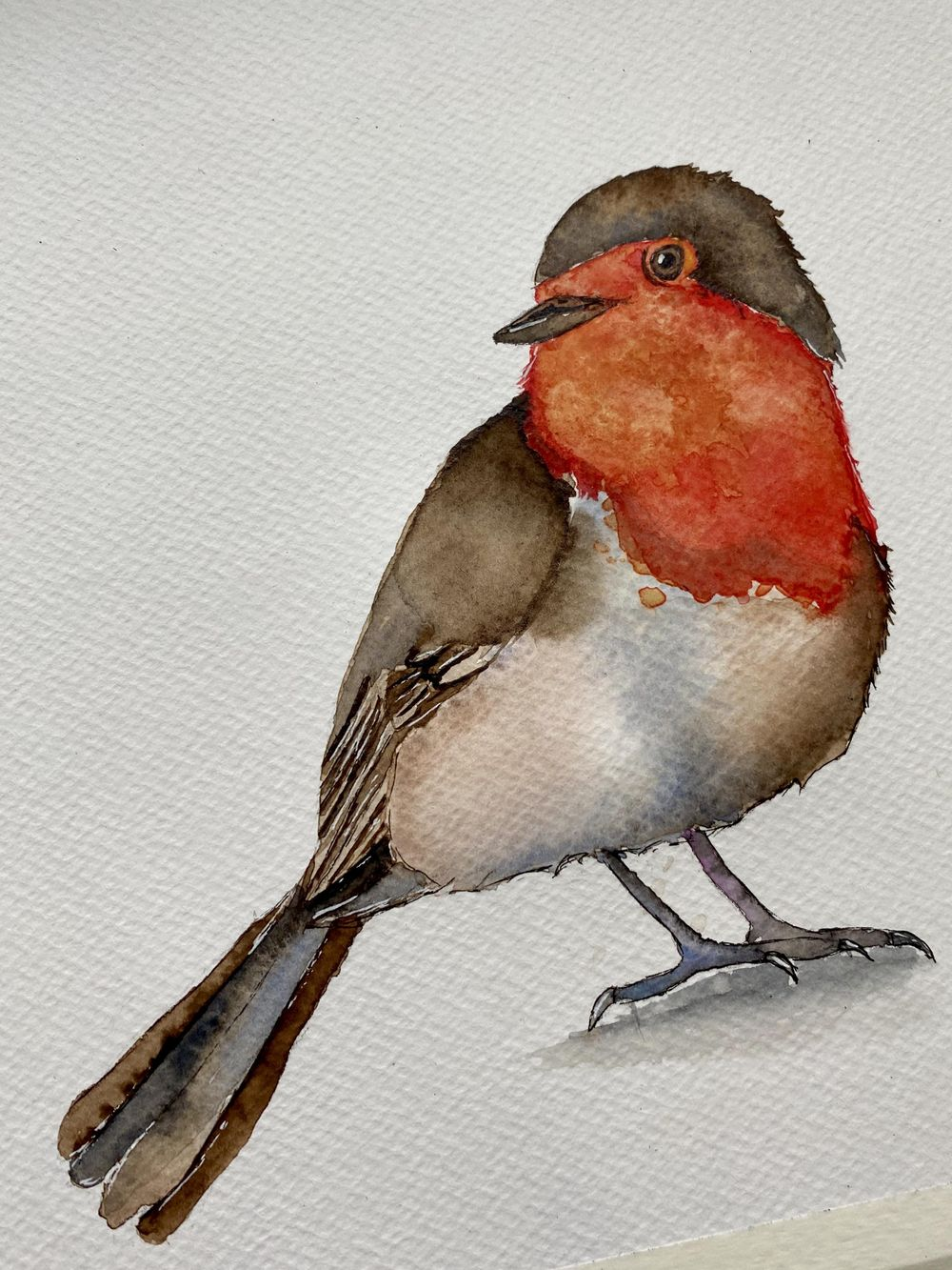 Watercolor Robin - image 2 - student project