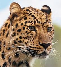 Cheeta - image 2 - student project