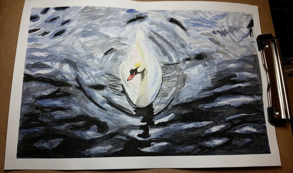 Swan in water - image 1 - student project