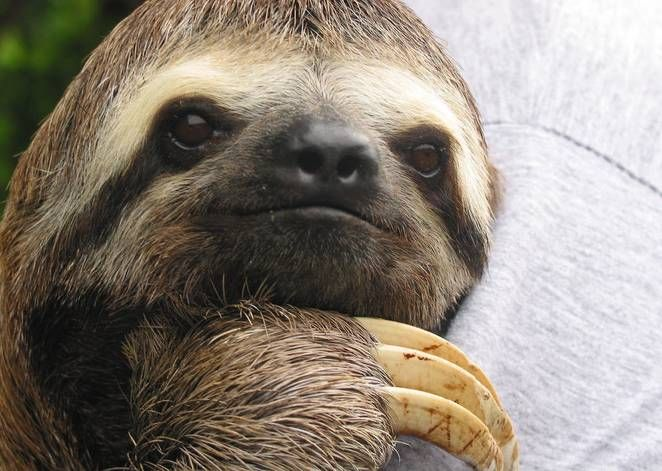 Sloth - image 2 - student project