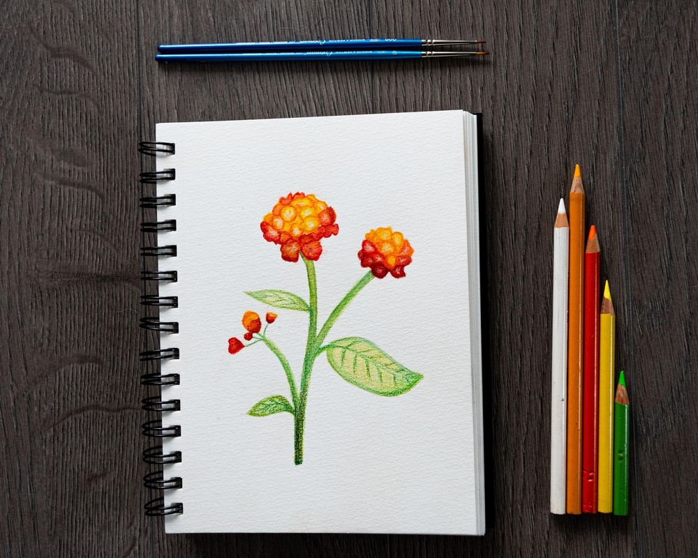 Lantana camara Flower - image 2 - student project