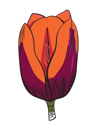 Tulip - image 1 - student project