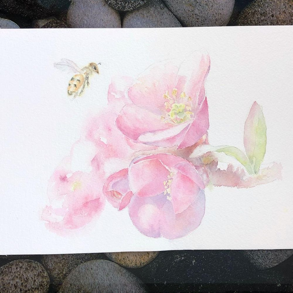 Quince Blossom - image 1 - student project