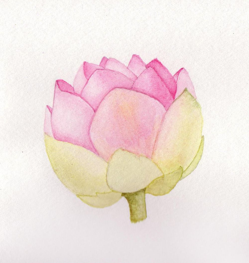 Botanical Journal - image 2 - student project