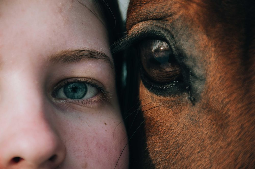 Horses - image 3 - student project