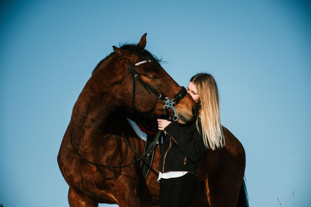 Horses - image 5 - student project