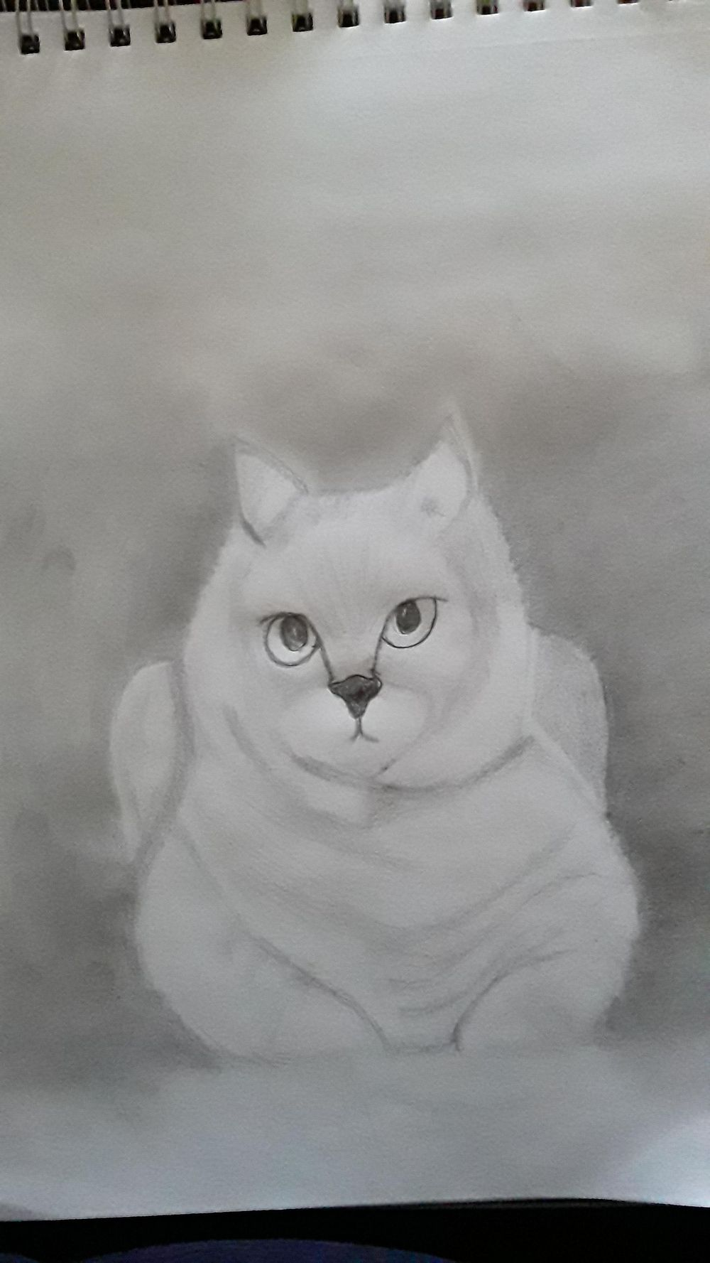 Cat - image 2 - student project