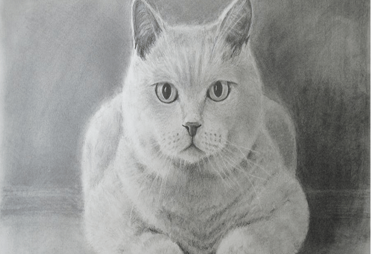 Cat - image 1 - student project