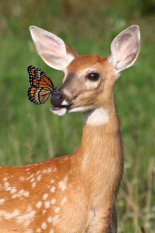 Curious Baby Deer - image 1 - student project