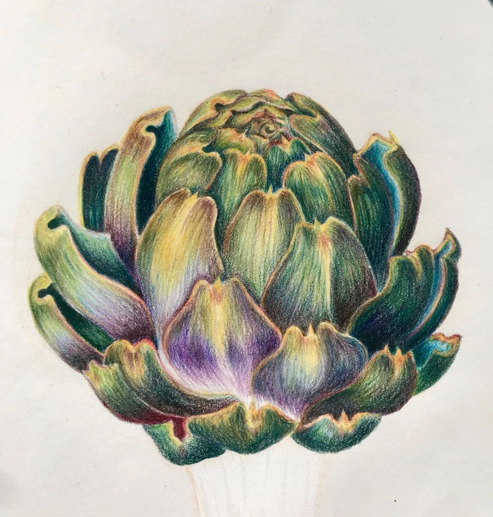 Watercolour artichoke - image 1 - student project