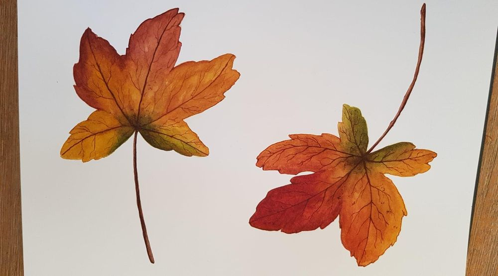 Autumn Leaves 07/04/2019 - image 1 - student project