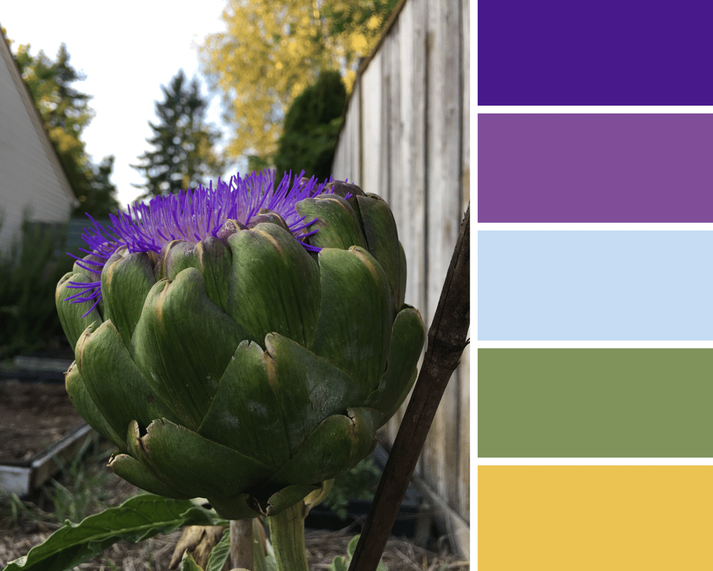 Artichoke in the Fall - image 1 - student project
