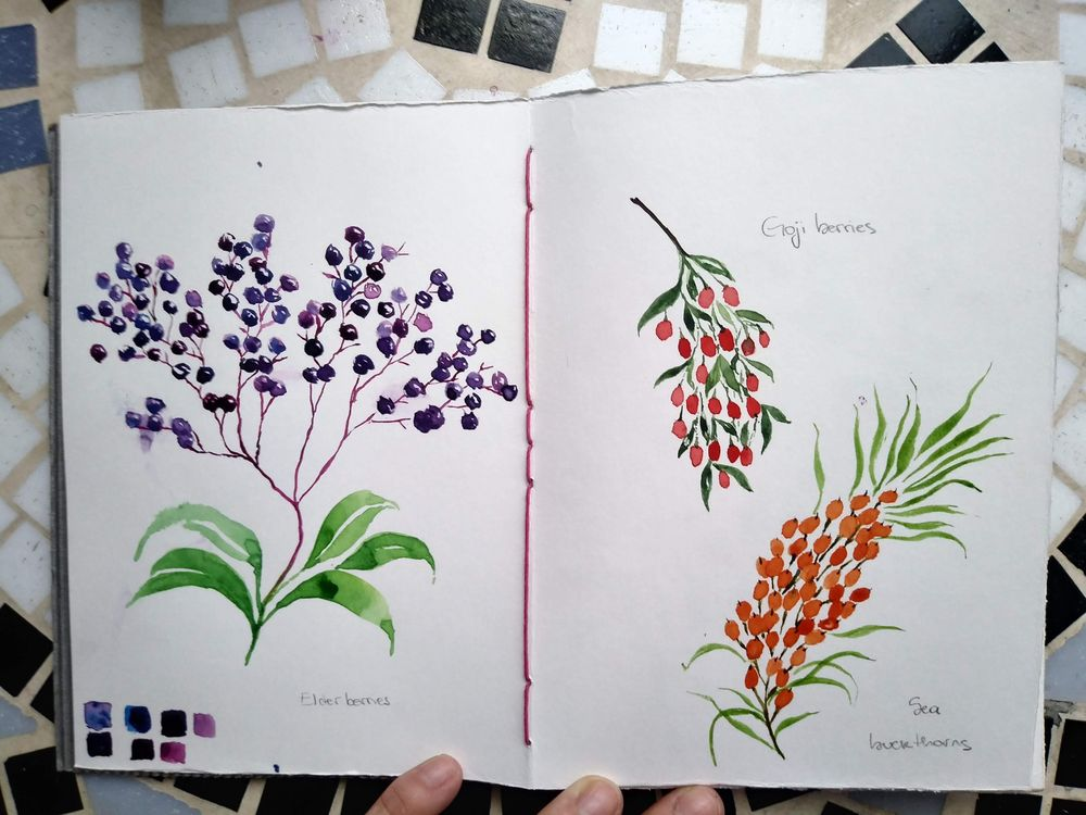Berries everywhere - image 1 - student project