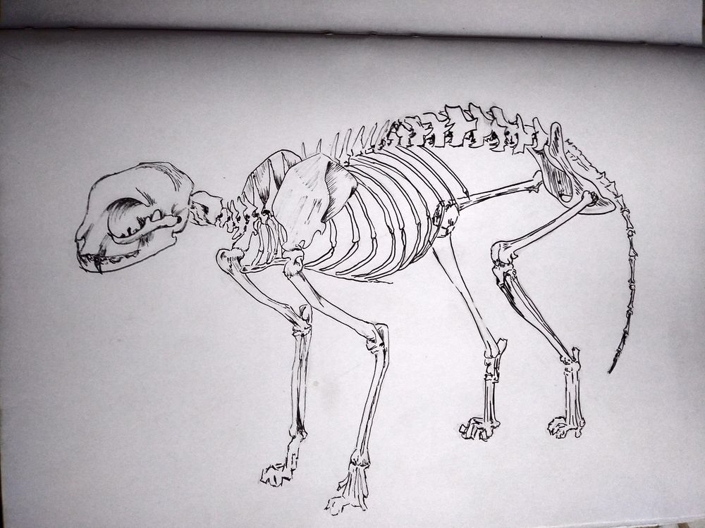 My favourite animal <3 - image 5 - student project