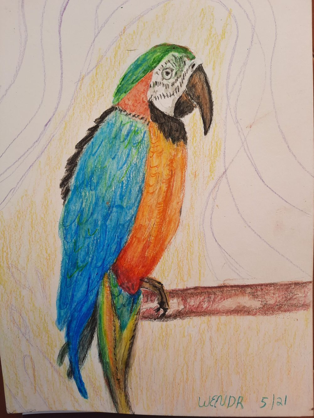 Macaw - image 1 - student project