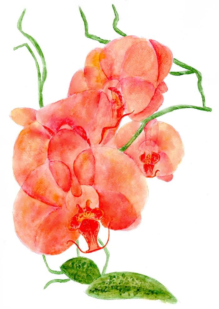 Orchids, watercolor painting - image 1 - student project