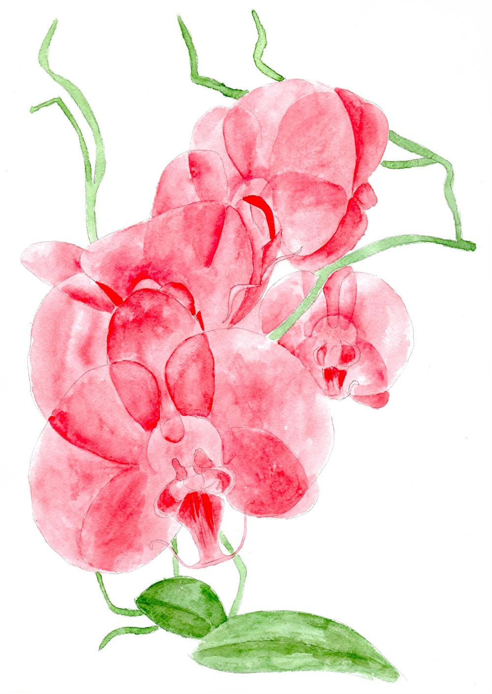 Orchids, watercolor painting - image 5 - student project