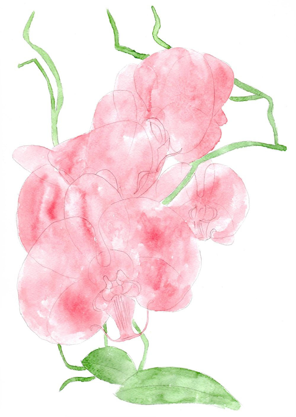 Orchids, watercolor painting - image 4 - student project