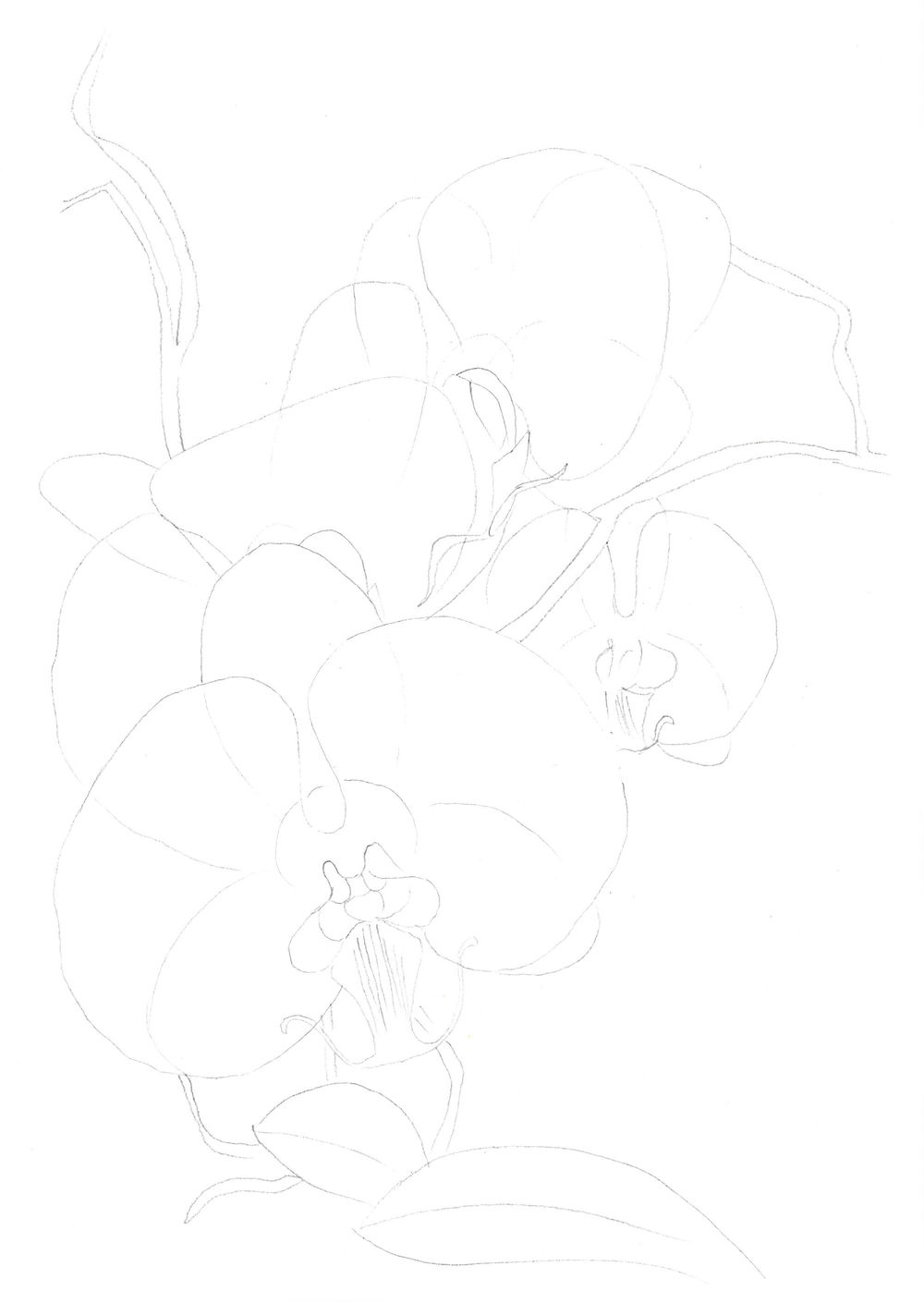 Orchids, watercolor painting - image 3 - student project