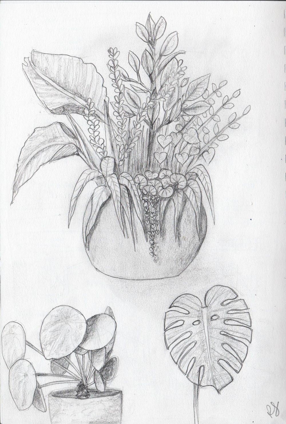 Drawing plants and leaves - image 2 - student project