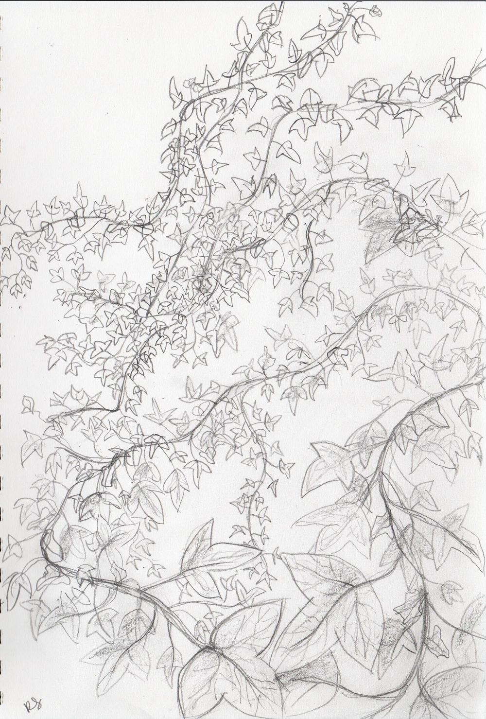 Drawing plants and leaves - image 3 - student project