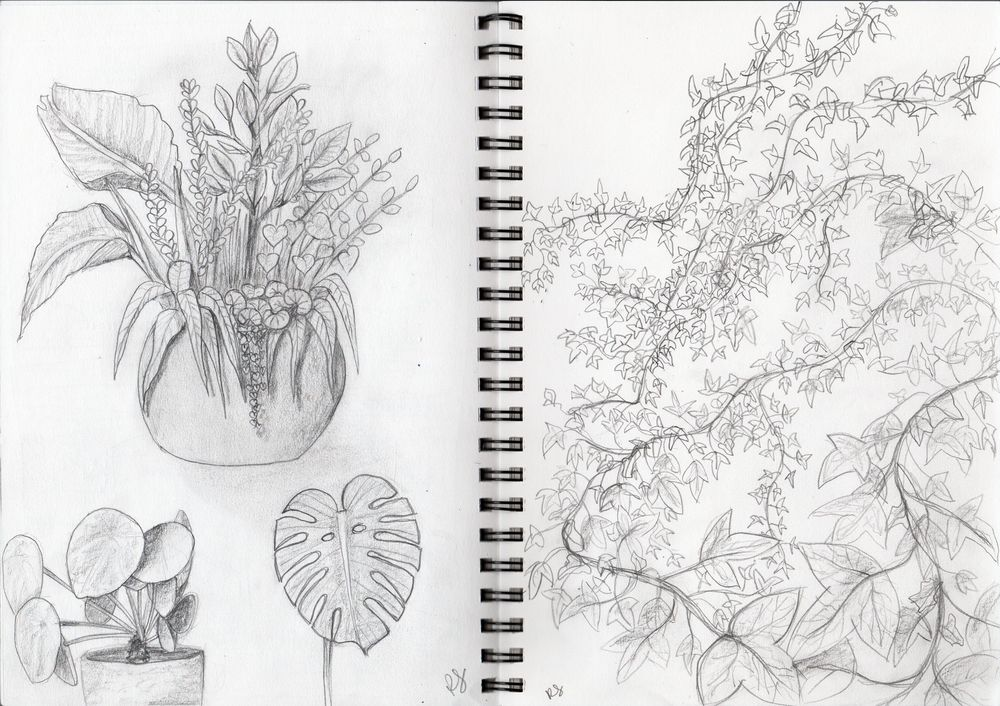Drawing plants and leaves - image 1 - student project