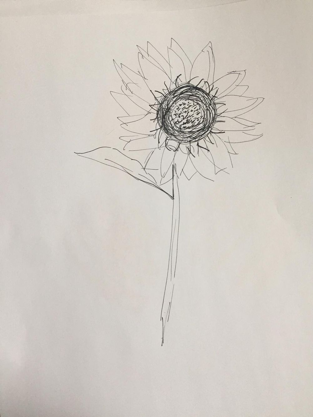 Sunflower in ink - image 2 - student project