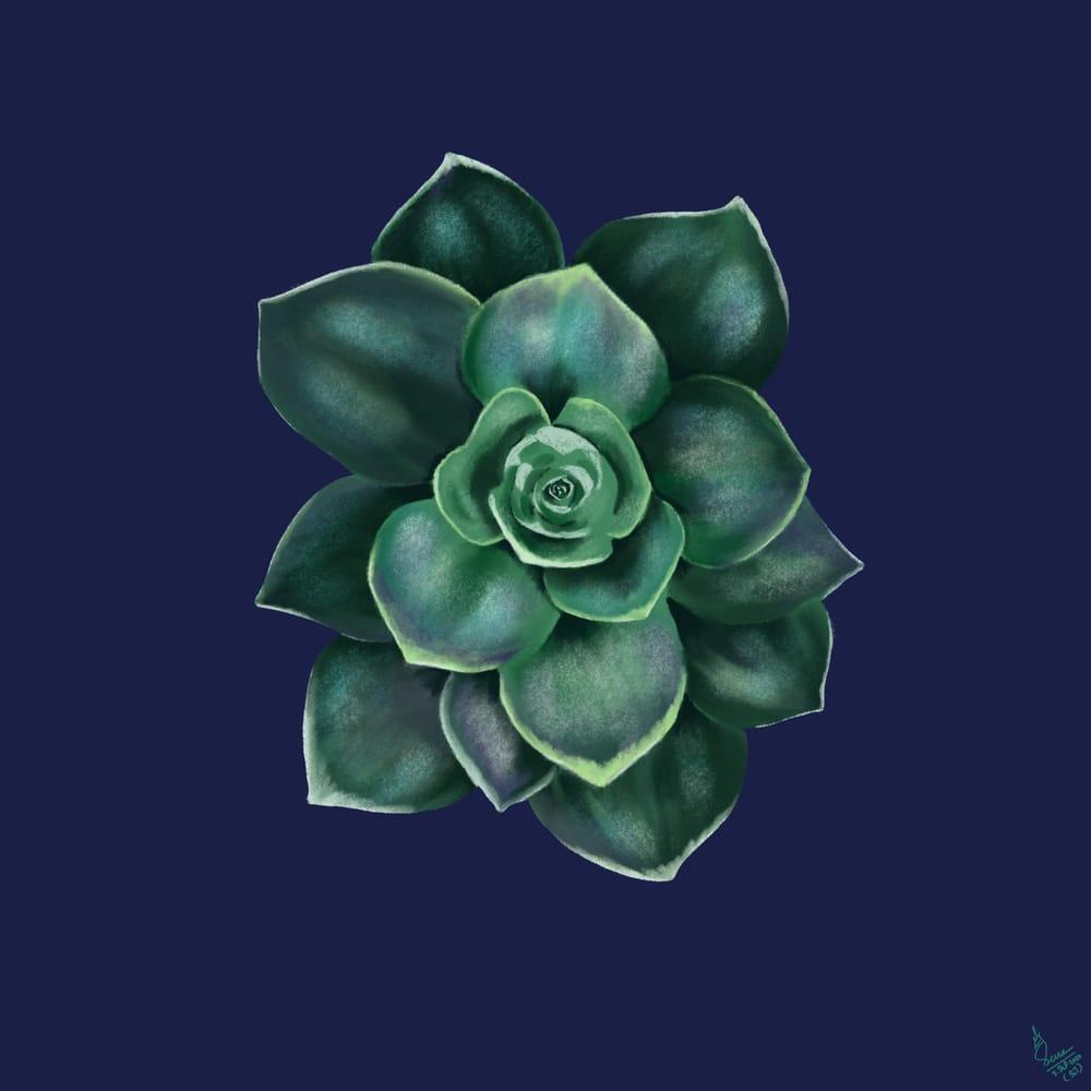 Succulent - image 1 - student project