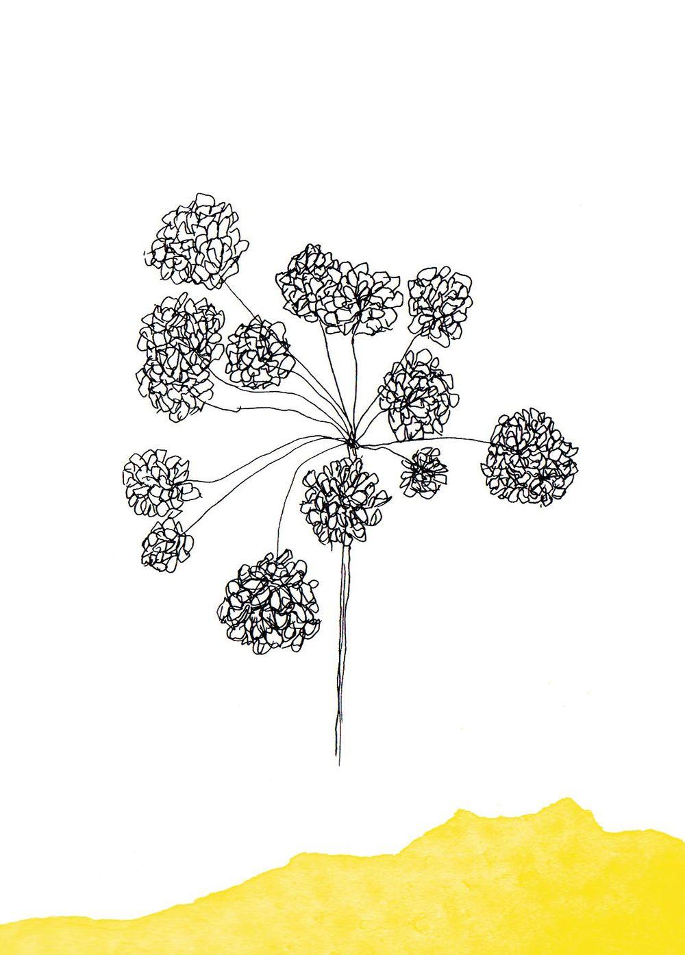 Botanical - image 2 - student project